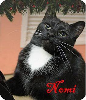 Domestic Shorthair Cat for adoption in Euclid, Ohio - Nomi