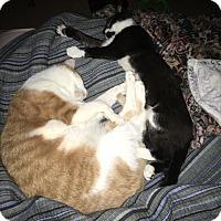 Adopt A Pet :: Magic - Morristown, NJ
