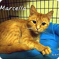 Adopt A Pet :: Marcella - Ocean City, NJ