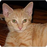 Adopt A Pet :: Mari - Frederick, MD