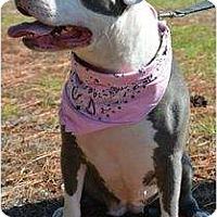 Adopt A Pet :: Kiera - Orlando, FL