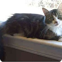 Adopt A Pet :: Cheyenne - Davis, CA