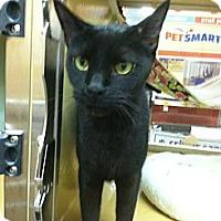 Adopt A Pet :: Shelton - Monroe, GA
