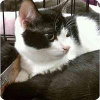 Adopt A Pet :: Link - Manalapan, NJ