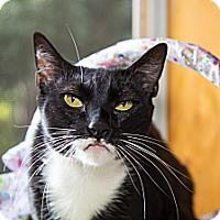 Adopt A Pet :: Bonbon - Poway, CA