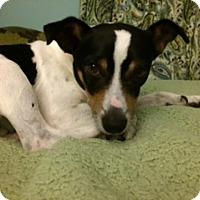 Adopt A Pet :: Devin - Marietta, GA