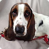 Adopt A Pet :: Maxwell - Columbia, SC