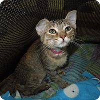 Adopt A Pet :: Ginger - Medina, OH