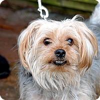 Adopt A Pet :: Nicholas - Tinton Falls, NJ