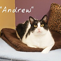 Adopt A Pet :: Andrew - Ocean City, NJ
