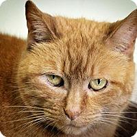 Adopt A Pet :: Heidi - Indianapolis, IN