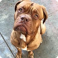 Adopt A Pet :: Frankie - Van Nuys, CA