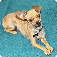 Adopt A Pet :: Chloe- Watch my video! - Temecula, CA