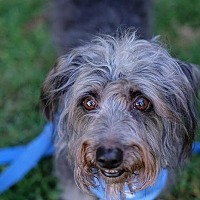 Adopt A Pet :: Mozart! Awesome Fellow! Video! - Santa Monica, CA