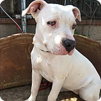 Adopt A Pet :: Hannah - Santa Ana, CA