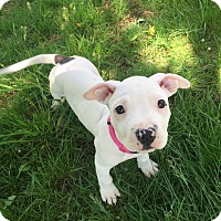 Adopt A Pet :: Eloise - Newtown, CT