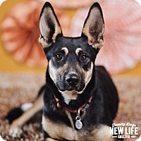 Adopt A Pet :: Lyndsey - Portland, OR