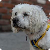 Adopt A Pet :: Mushu - Encino, CA