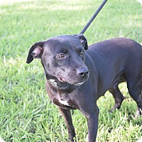 Adopt A Pet :: EDEN - Beaumont, TX