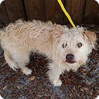 Adopt A Pet :: Eljay - Gainesville, FL