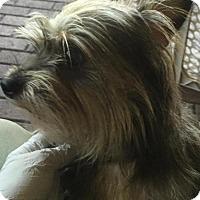 Adopt A Pet :: Jon Jon - Jupiter, FL