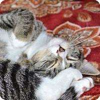 Adopt A Pet :: Moe - Albemarle, NC