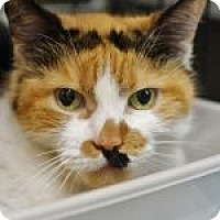 Adopt A Pet :: Taya - Medford, MA