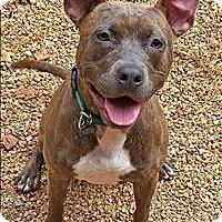 Adopt A Pet :: Nala - Charlottesville, VA