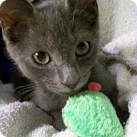 Adopt A Pet :: Wrangler - Merrifield, VA