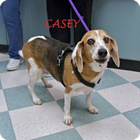 Adopt A Pet :: CASEY - Ventnor City, NJ