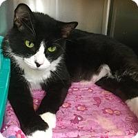 Adopt A Pet :: Bianca - Webster, MA