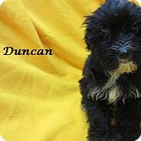 Adopt A Pet :: Duncan - Bartonsville, PA