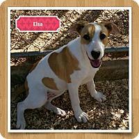 Adopt A Pet :: Elsa - Granbury, TX