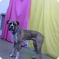 Adopt A Pet :: URGENT ON 12/13 at DEVORE - San Bernardino, CA