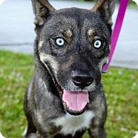 Adopt A Pet :: Noel - Jupiter, FL