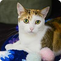 Adopt A Pet :: Lavender - Peace Dale, RI