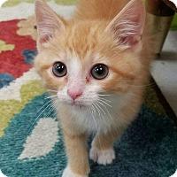 Adopt A Pet :: Yogi Bear - Greenville, NC