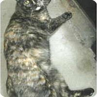 Adopt A Pet :: Tori - Mesa, AZ
