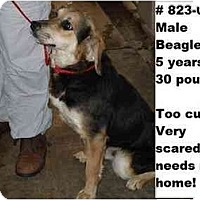 Adopt A Pet :: # 823-09 - RESCUED! - Zanesville, OH