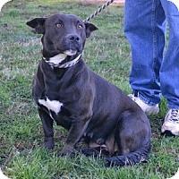 Adopt A Pet :: Libby - Athens, GA
