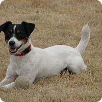 Adopt A Pet :: Tiny in Houston - Houston, TX