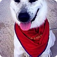 Adopt A Pet :: Chandler ~ Adoption Pending - Youngstown, OH