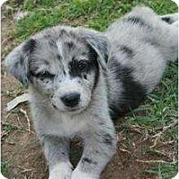 Adopt A Pet :: Brenna - Richmond, VA