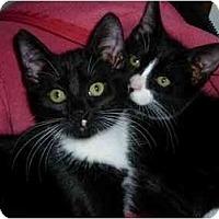 Adopt A Pet :: Dottie - Modesto, CA