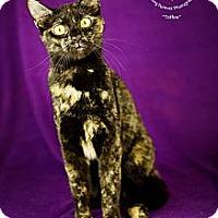 Adopt A Pet :: Toffee - San Antonio, TX