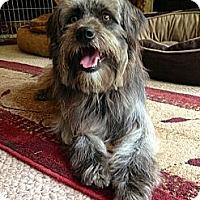 Adopt A Pet :: Shaggy - Marlton, NJ