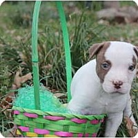 Adopt A Pet :: Peanut - Reisterstown, MD