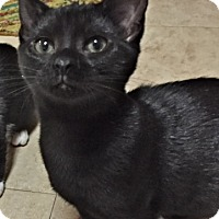 Adopt A Pet :: Parker - Deerfield Beach, FL