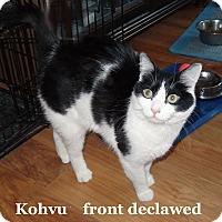 Adopt A Pet :: Kohvu - Bentonville, AR