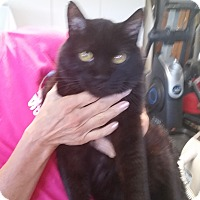 Adopt A Pet :: Dexter - Fort Wayne, IN